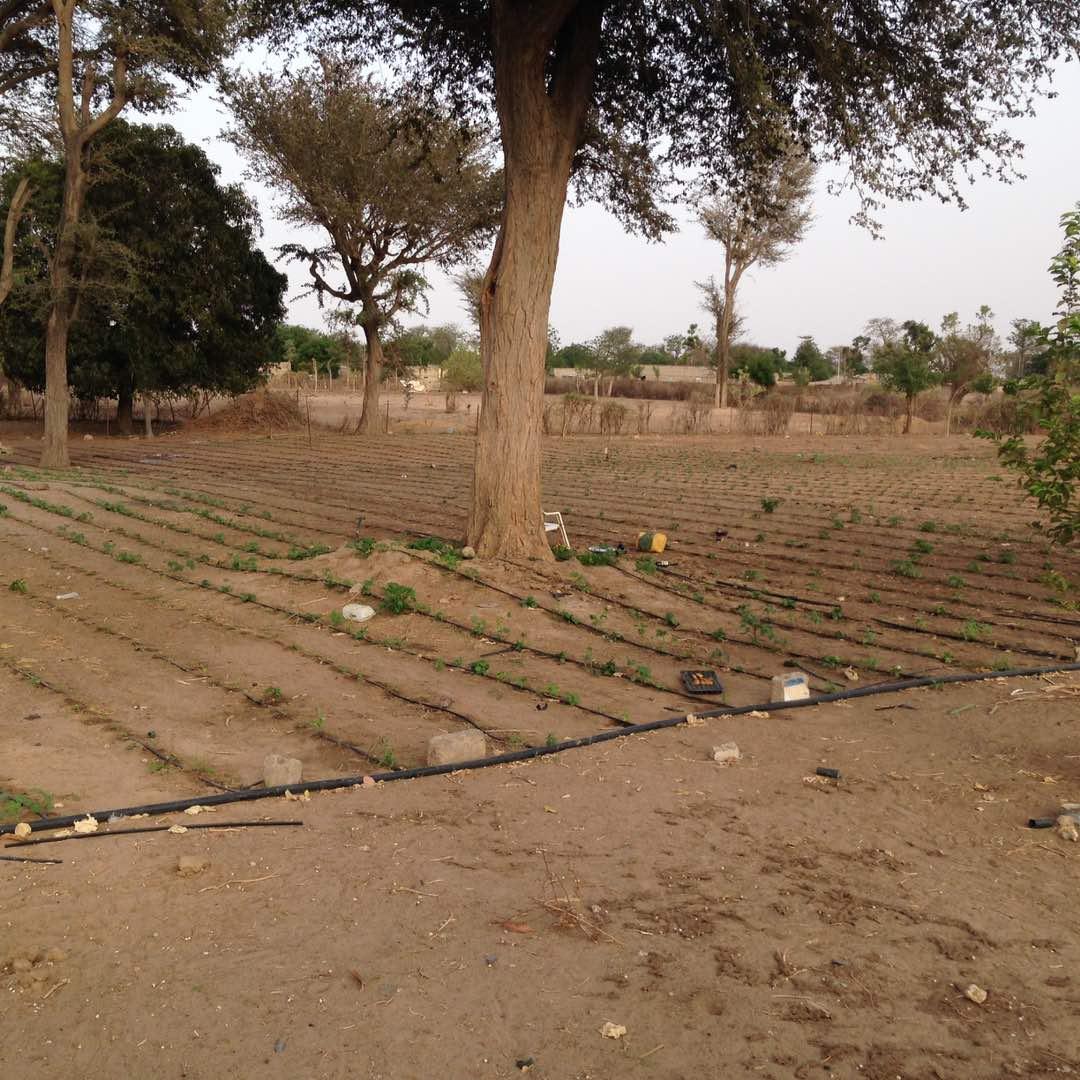 Les nouvelles plantations de l'année