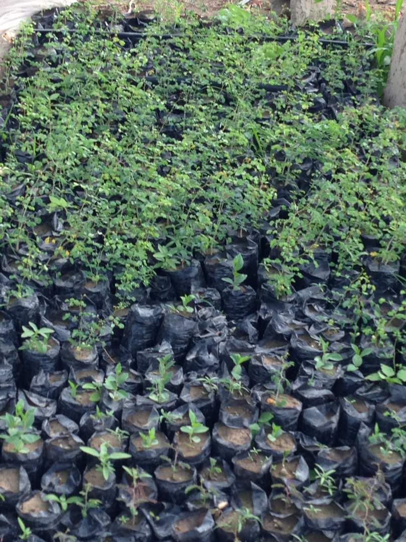 Un ensemble de plants préparés