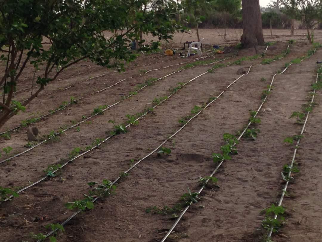 Les système d'irrigation
