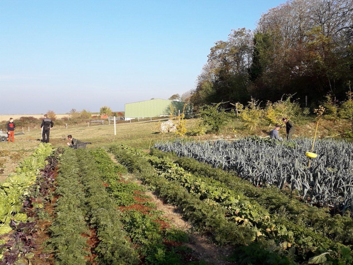 Potager du lycee agricole de Rethel avant la derniere recolte 2018