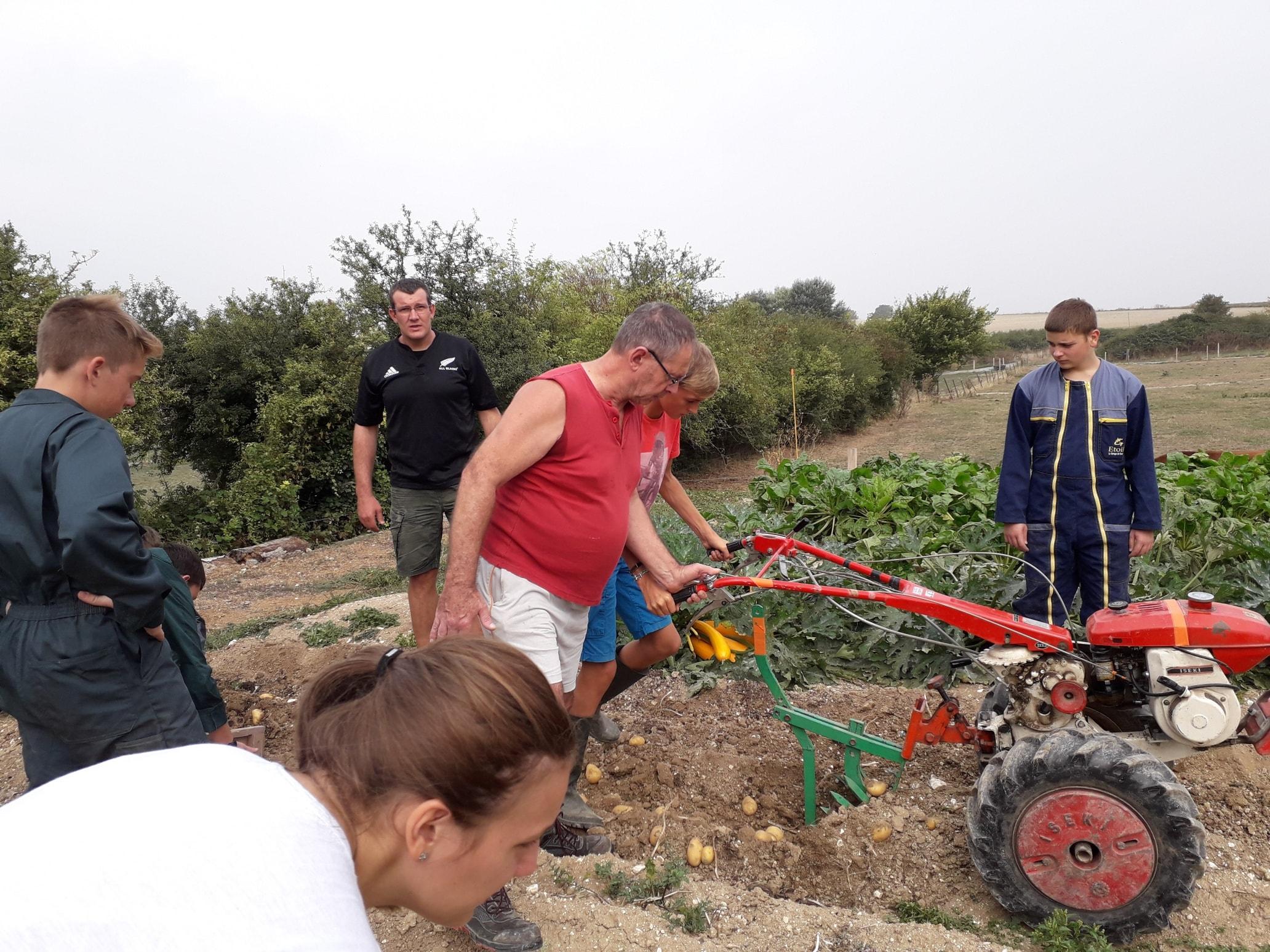 La récolte de pommes de terre