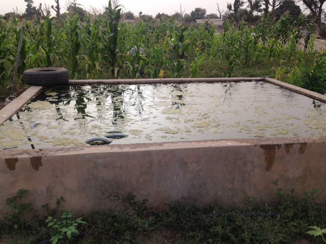 Reservoir plein d'eau chez des maraichers a Ndiaganiao